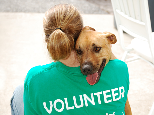 shelter_volunteer