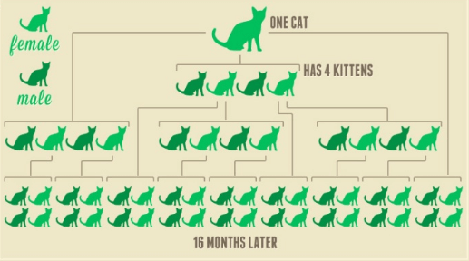 Spay-Neuter-infographic